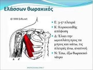 Οι σωστές ασκήσεις στήθους στο γυμναστήριο 1