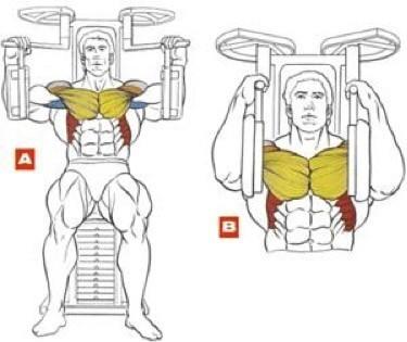 Οι σωστές ασκήσεις στήθους στο γυμναστήριο 3