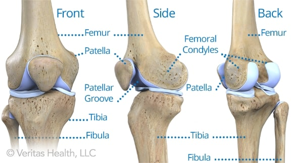 bones-adult-knee