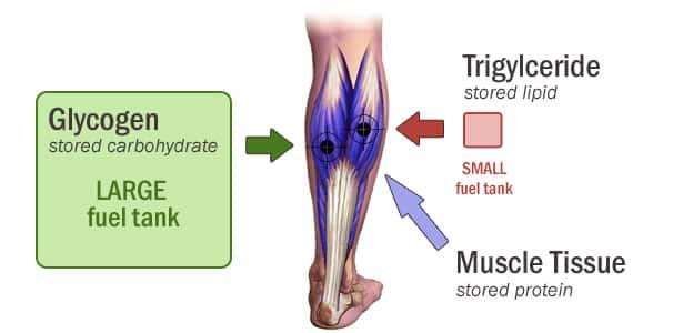 gastroc-muscle2