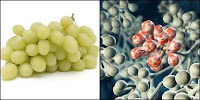 Ήξερες ότι η Πυθαγόρεια Διατροφή καταπολεμά το 95% των ασθενειών; 7